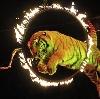 Цирки в Хорлово