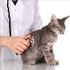 Ветеринарные клиники в Хорлово